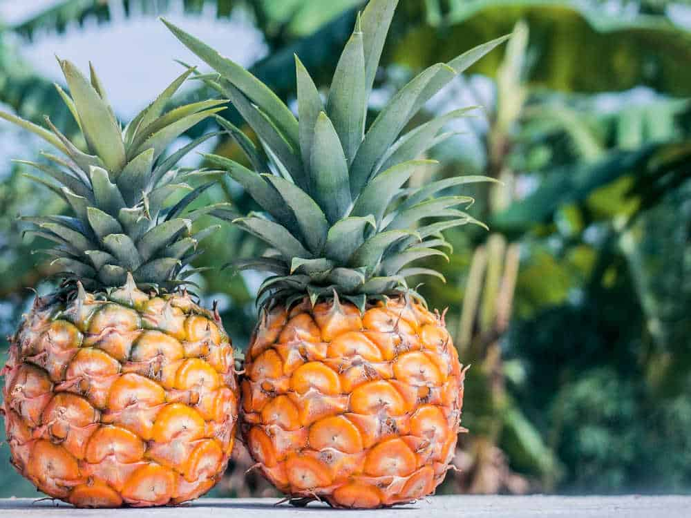 Pineapple Health Benefits, Calories & Dog Snacks
