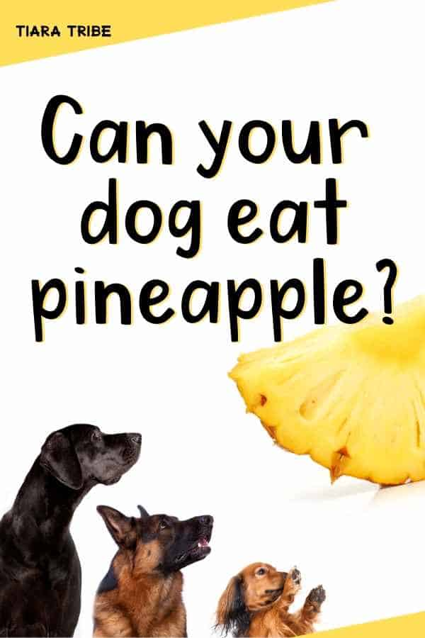 Can your dog eat pineapple?