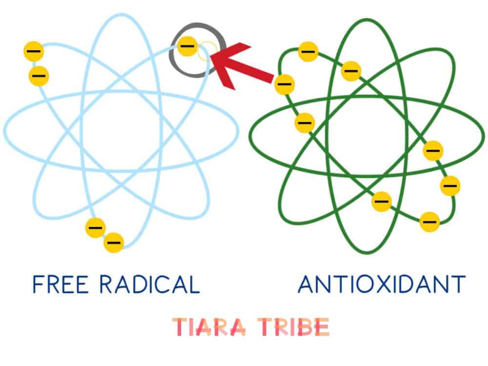 Antioxidant giving electron to free radical 2
