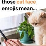 Cat face emoji meanings