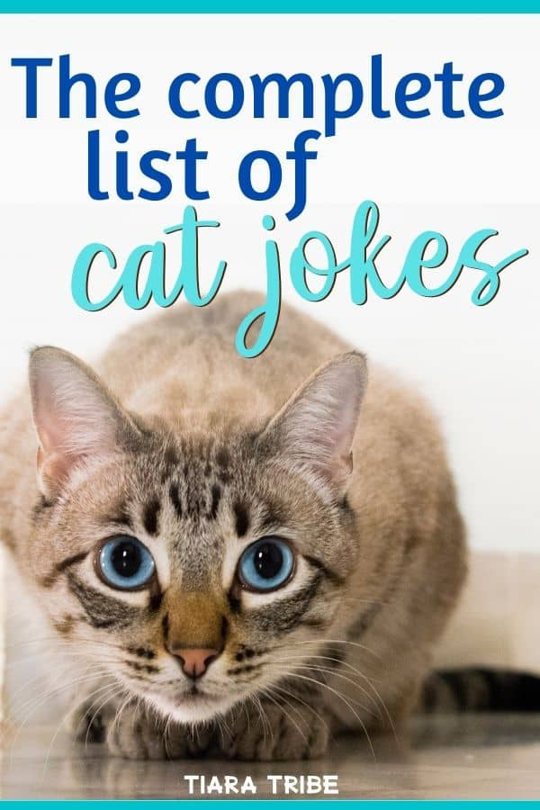 Complete list of cat jokes