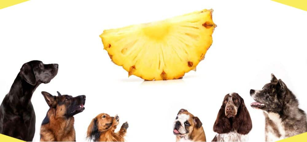 How to feed pineapple to your dogs