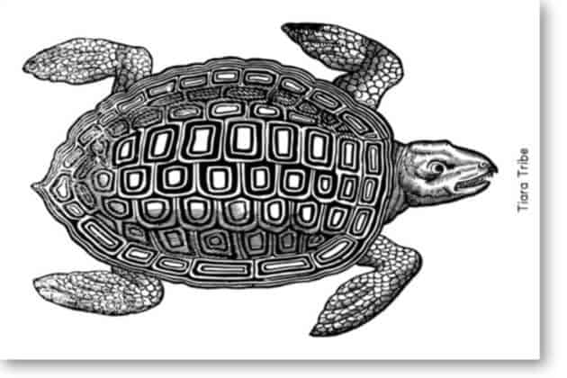 Sea Turtle Coloring Pages Tiara Tribe