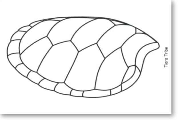 Sea turtle shell coloring page - Blog