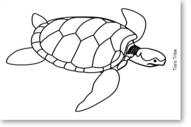 Swimming sea turtle coloring page - Blog