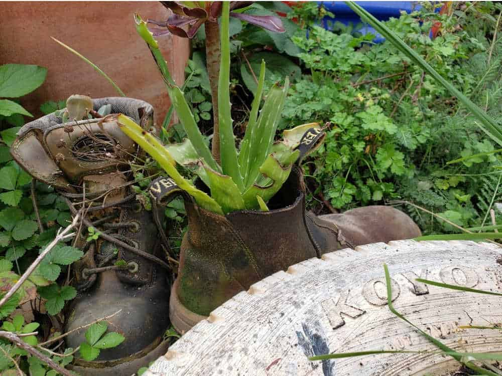 Upcycle garden ideas from the Botanical Gardens