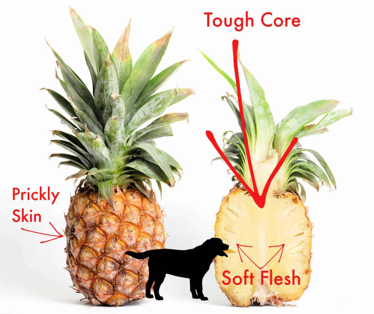 What part of pineapple can dogs eat?